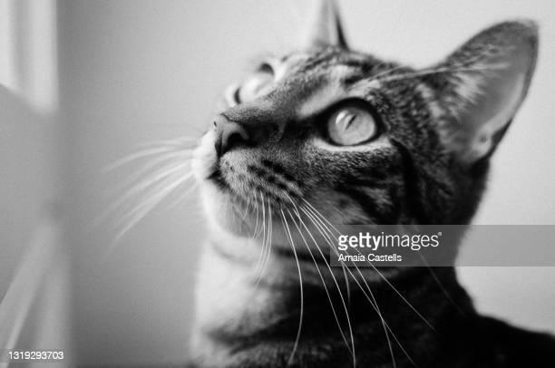 primer plano de cara de cachorro de gato en blanco y negro - blanco y negro ストックフォトと画像