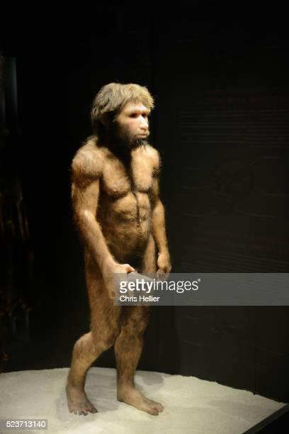 primitive man homo heidelbergensis - homo erectus foto e immagini stock
