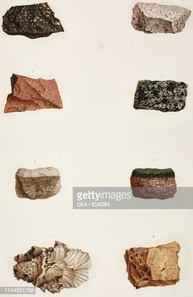 Primitive rocks and madreporites found in Ras Muhammad and along the coasts of the Eleatic Gulf Mineralogy plate by FrancoisMichel de Roziere colored...
