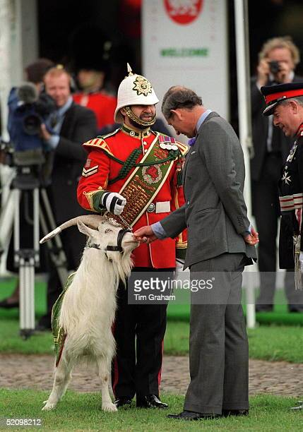 Prince Charles At Cardiff Castle Wales With Shenkin The Goat The Regimental Mascot Of The 2nd Battalion Of The Royal Regiment Of Wales And His...