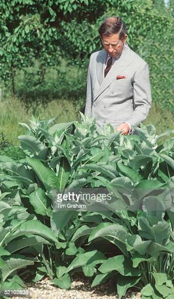 Prince Charles Examing A Plant At Yalding Organic Gardens In Kent