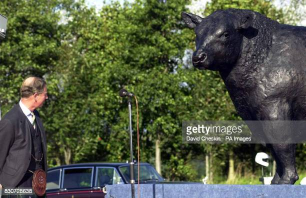 Prince Charles known as the Duke of Rothesay in Scotland unveiling an Aberdeen Angus sculpture at the Alford Transport Museum The bull made by artist...