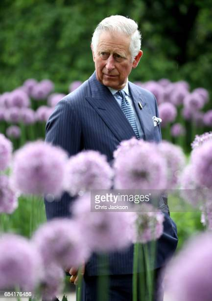 Prince Charles Prince of Wales amongst the Alliums during a visit to Kew Gardens on May 17 2017 in London England