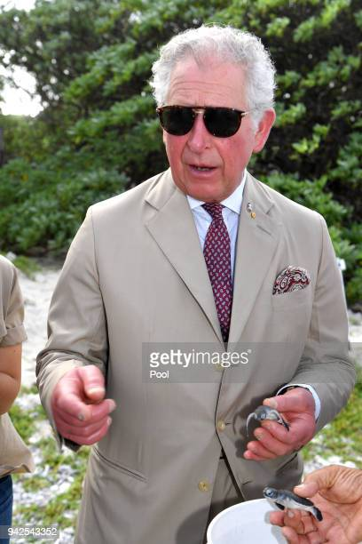Prince Charles Prince of Wales holding a green baby turtle attends a roundtable meeting discussing coral resilience on Lady Elliot Island on April 6...