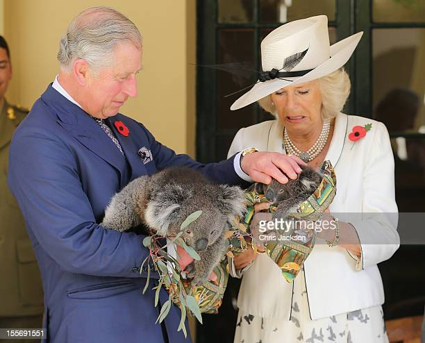 Prince Charles, Prince of Wales holds a koala called Kao whilst Camilla, Duchess of Cornwall holds a koala called Matilda at Government House on...
