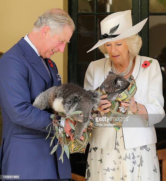 Prince Charles Prince of Wales holds a koala called Kao whilst Camilla Duchess of Cornwall holds a koala called Matilda at Government House on...