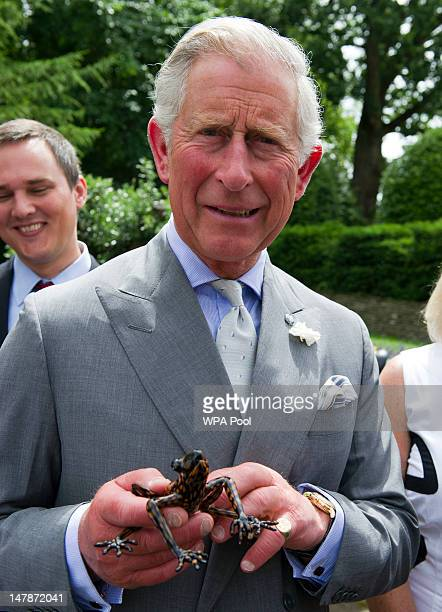 Prince Charles Prince of Wales holds an Ecuadorian stream tree frog species named 'Hyloscirtus princecharlesi' in honour of the Prince's support to...