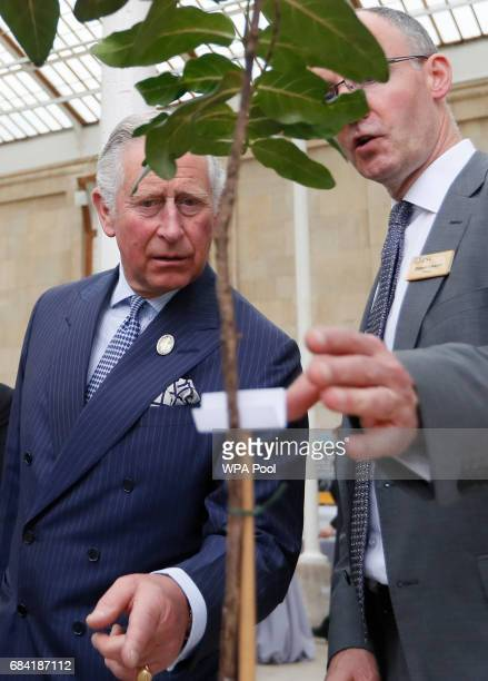 Prince Charles Prince of Wales left looks towards a specimen of Ramosmania rodriguesii tours the Great Broad Walk during a visit to the Royal Botanic...