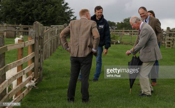 Prince Charles Prince of Wales patron of the Rare Breeds Survival Trust looks as a goat briefly gets its head stuck through a fence during a visit to...