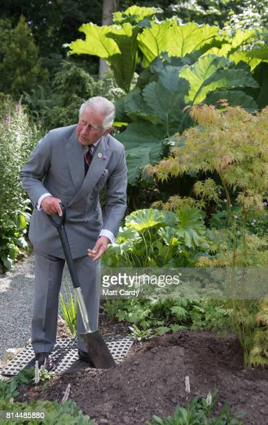 Prince Charles Prince of Wales plants a tree as he takes a tour of the gardens at Plas Cadnant Hidden Gardens during The Prince of Wales' annual...