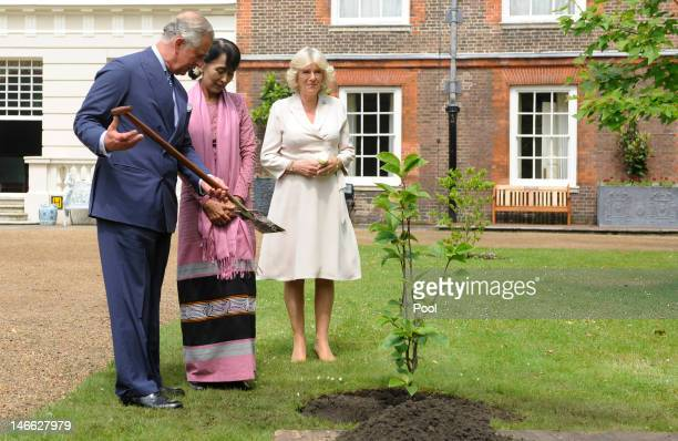 Prince Charles Prince of Wales shows Myanmar opposition leader Aung San Suu Kyi a shovel before finishing the planting of a Magnolia tree next to...