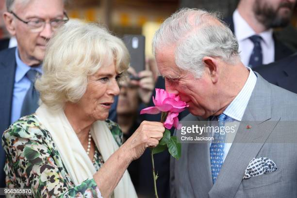 Prince Charles, Prince of Wales smells a rose offered to him by Camilla, Duchess of Cornwall during a visit to Nice Flower Market on May 9, 2018 in...