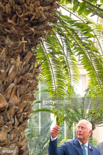 Prince Charles Prince of Wales visits the Royal Botanic Gardens to celebrate the recently restored Temperate House and to tour the restored Great...
