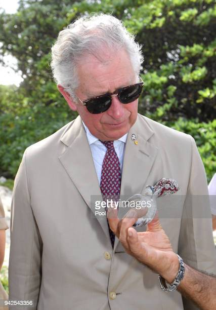 Prince Charles Prince of Wales with a green baby turtle attends a roundtable meeting discussing coral resilience on Lady Elliot Island on April 6...