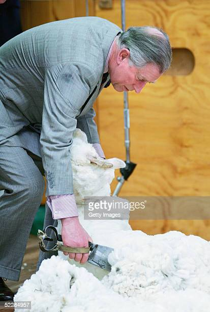Prince Charles shears a merino sheep with a pair of hand shears during a visit to Moutere Sheep Station in Alexandra March 7 2005 in Dunedin New...