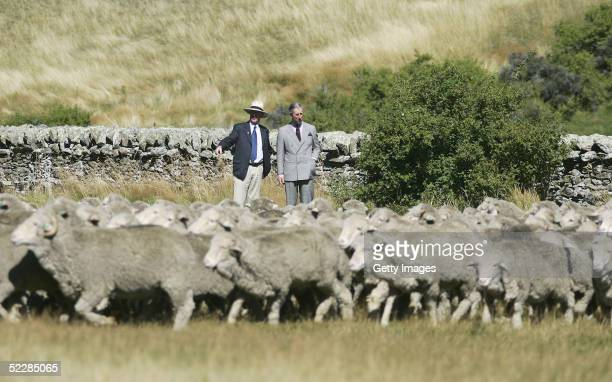 Prince Charles talks with New Zealand Minister of Agriculture Jim Sutton as merino sheep are mustered past during a visit to Moutere Sheep Station in...