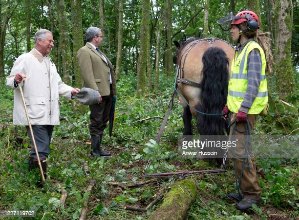 Prince Charles The Prince Of Wales watches apprentices from British Horse Loggers logging in woodland on his Llwynywermod Estate on July 10 2012 in...