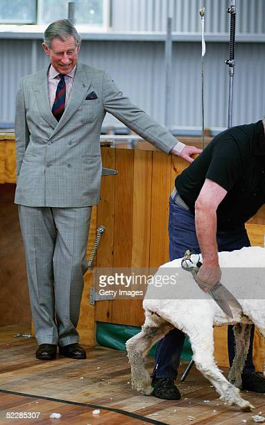 Prince Charles watches as world champion blade shearer Peter Casserley shears a merino sheep with a pair of hand shears during a visit to Moutere...