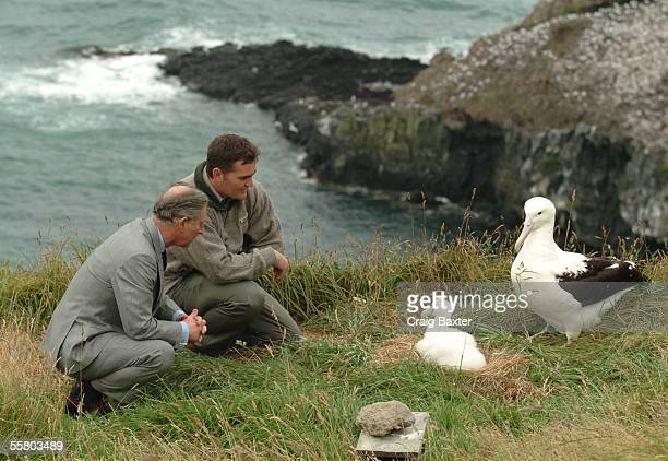 Prince Charles with head ranger Lyndon Perriman looks over a nesting Northern Royal Albatross with its 6 week old chick at the Taiaroa Heads Nature...