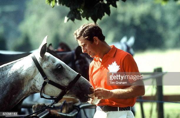 Prince Charlesfeeding Sugar Lumps As A Treat To His Polo Pony