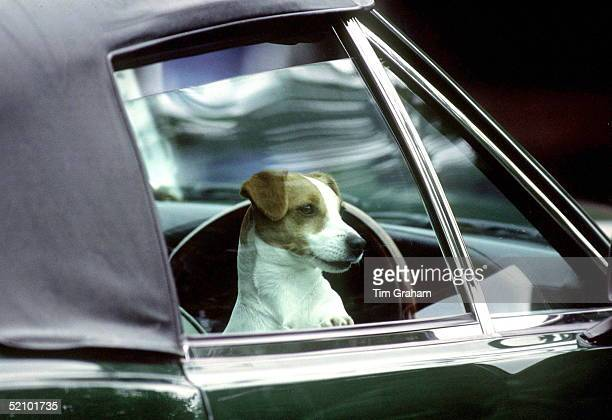 Prince Charles's Jack Russel Terrier Dog Waiting For Him In His Green Aston Martin Volante Convertible Sports Car During Cartier International Polo...