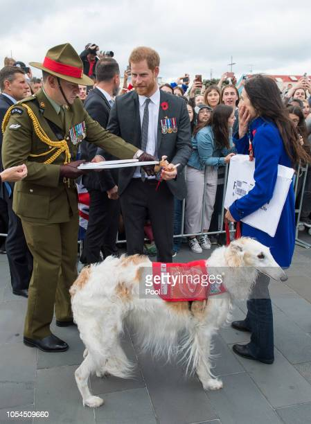 Prince Harry Duke of Sussex meet Kotuku Foundation Assistance Animals Aotearoa representatives during a public walkabout at the newly unveiled UK war...