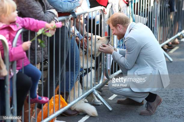 Prince Harry Duke of Sussex strokes a golden retriever of a wellwisher as he arrives for an engagement at Edes House during an official visit to...