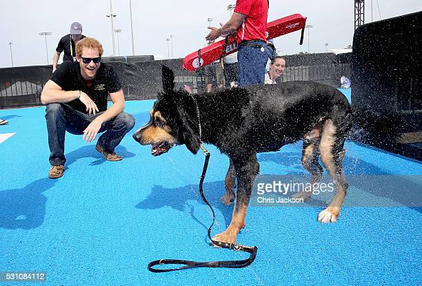 Prince Harry helps a service dog out from the pool as they take part in a race in the pool with their Invictus competitor handlers on the final day...