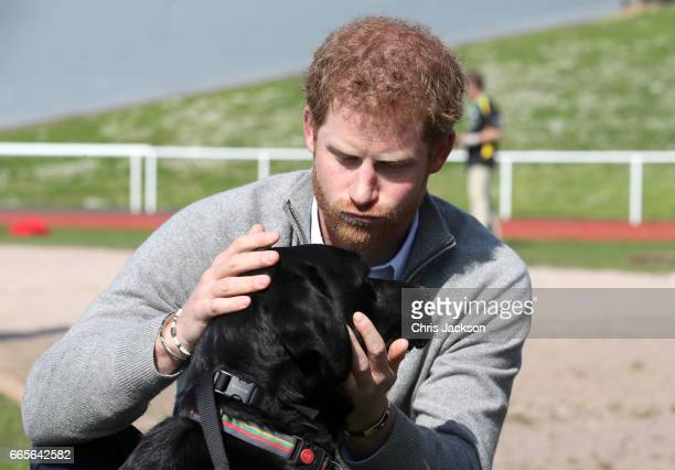 Prince Harry Patron of the Invictus Games Foundation with Jester the dog as he attends the UK team trials for the Invictus Games Toronto 2017 held at...