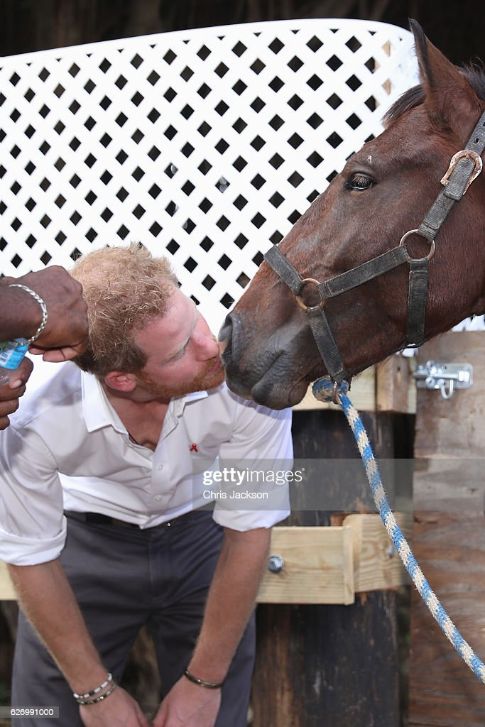 Prince Harry pets a horse at 'Nature Fun Ranch' on the eleventh day of an official visit on December 1, 2016 in St Andrew, Barbados. The ranch allows young people to speak freely with one another about important topics, including HIV/AIDS, providing them with a positive focus to guide their lives in the right direction. Prince Harry's visit to The Caribbean marks the 35th Anniversary of Independence in Antigua and Barbuda and the 50th Anniversary of Independence in Barbados and Guyana.