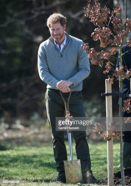 Prince Harry plants a tree during a visit to Epping Forest to view the Wood Pasture Restoration Project which is part of The Queen's Commonwealth...