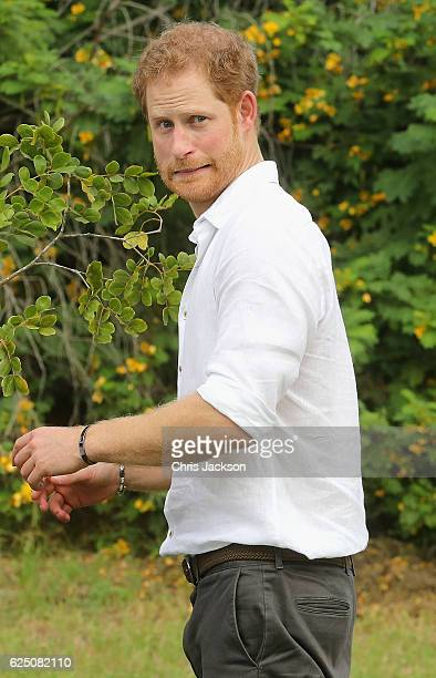 Prince Harry plants a tree during the unveiling of the dedication to The Queen's Commonwealth Canopy and Arbour Day Fair at Queen Victoria Park...