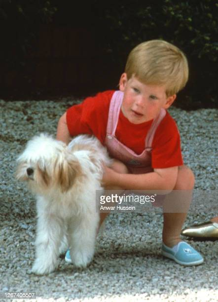Prince Harry plays with a dog at Marivent Palace on August 10, 1987 in Palma, Majorca.