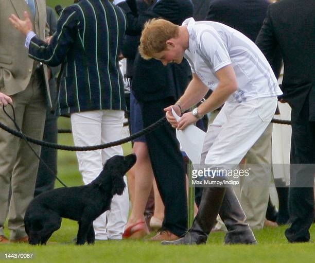 Prince Harry plays with Prince William's and Catherine Duchess of Cambridge's dog 'Lupo' after playing in the Audi Polo Challenge charity polo match...