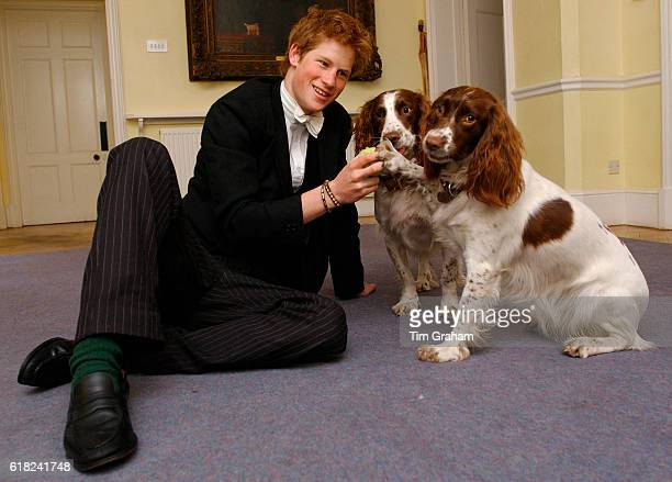 Prince Harry plays with the dogs owned by Andrew Gailey the housemaster of Manor House at Eton