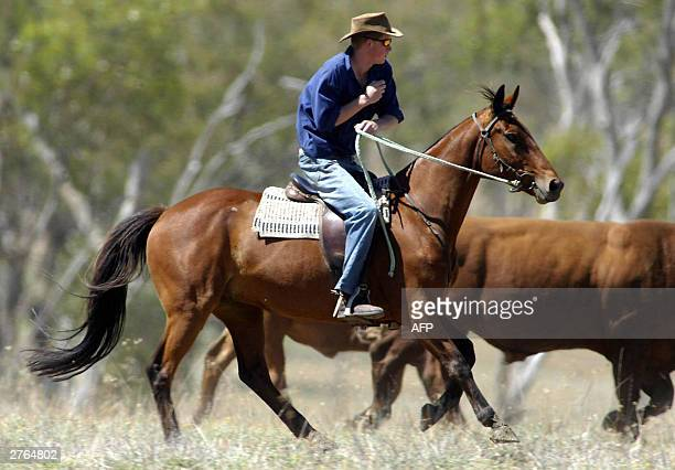 Prince Harry rides his horse 'Guardsman' with the team mustering herd bulls at the Tooloombilla cattle farm in Queensland 27 November 2003 AFP...