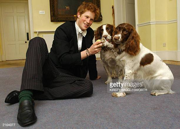 Prince Harry the younger son of the Prince of Wales plays 12 May 2003 with Rosie and Jenny the dogs owned by Andrew Gailey the housemaster of the...