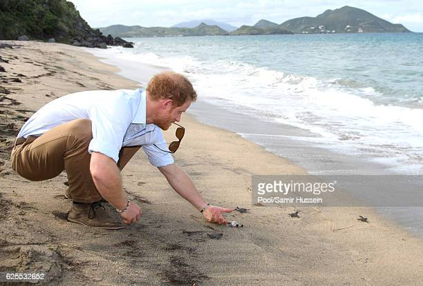 Prince Harry visits the Nevis turtle conservation project on Lover's Beach on the fourth day of an official visit on November 23 2016 in Nevis Saint...