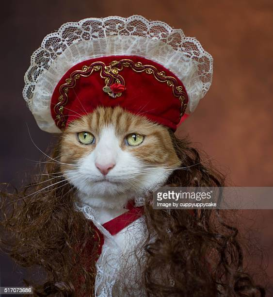 prince herbie - cat costume stock photos and pictures