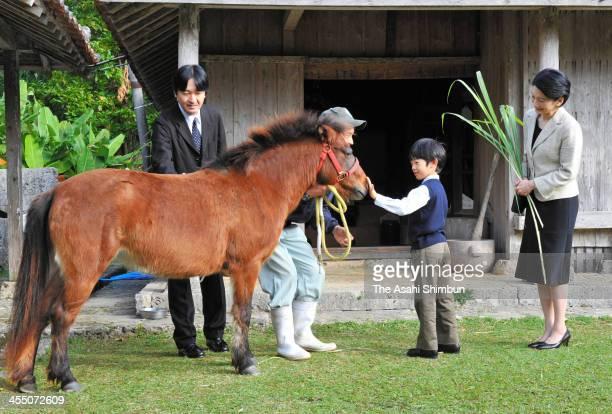 Prince Hisahito plays with a Yonaguni horse while Prince Akishino and Princess Kiko of Akishino watch at the Okinawa Kodomo-no-Kuni on December 11,...