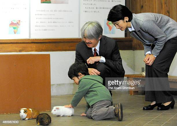 Prince Hisahito plays with guinea pigs while Prince Akishino and Princess Kiko of Akishino watch during their visit to the Ueno Zoo on October 26...