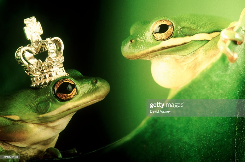 Prince of Frogs : Stock Photo