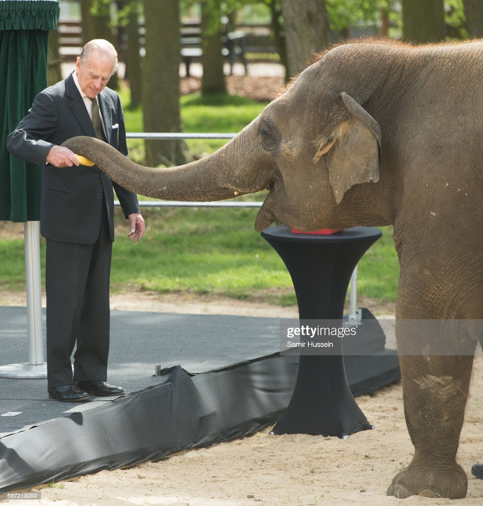 Prince Philip, Duke of Edinburgh feeds Donna the elephant a banana during a visit the ZSL Whipsnade Zoo at the Elephant Centre on April 11, 2017 in Dunstable, United Kingdom.