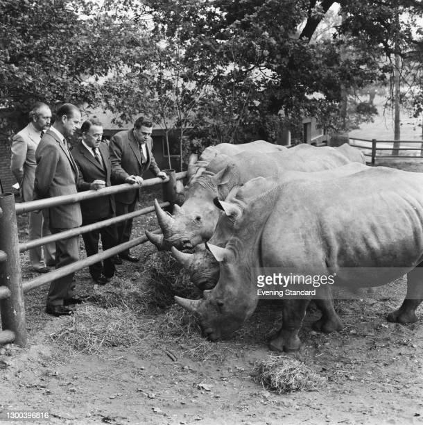 Prince Philip, the Duke of Edinburgh meets the rhinoceroses at Windsor Safari Park in Berkshire, UK, 25th October 1972.