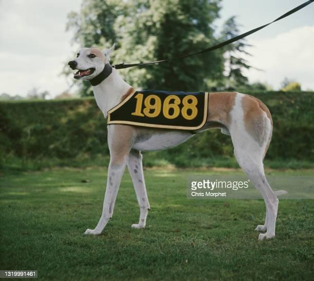 Prince Philip's greyhound Camira Flash, winner of the 1968 Greyhound Derby, UK, circa 1968.