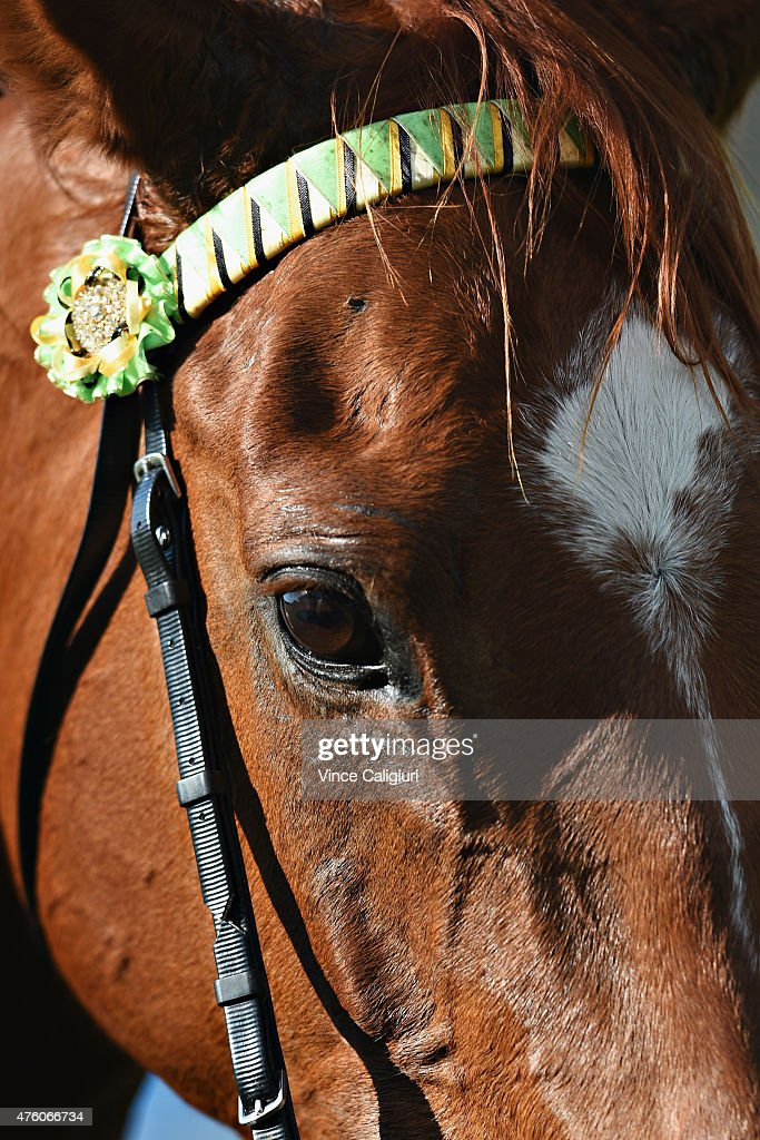 Prince Rahy poses after winning Race 4 during Melbourne Racing at Moonee Valley Racecourse on June 6, 2015 in Melbourne, Australia.