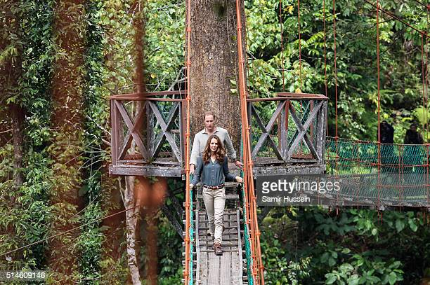 Prince William Duke of Cambride and Catherine Duchess of Cambridge abseil in the rainforest in Danum Valley Research Center in Danum Valley on the...
