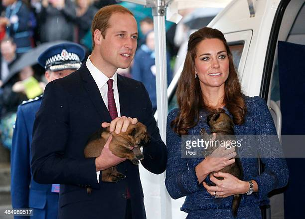 Prince William Duke of Cambridge and Catherine Duchess of Cambridge hold puppies during a visit to the Royal New Zealand Police College on April 16...
