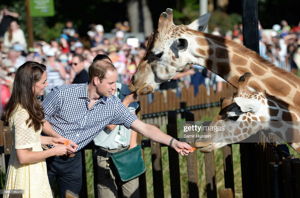 Prince William, Duke of Cambridge and Catherine, Duchess of Cambridge feed giraffes as they isit the Bilby Enclosure at Taronga Zoo on April 20, 2014 in Sydney, Australia. The Duke and Duchess of Cambridge are on a three-week tour of Australia and New Zealand, the first official trip overseas with their son, Prince George of Cambridge.