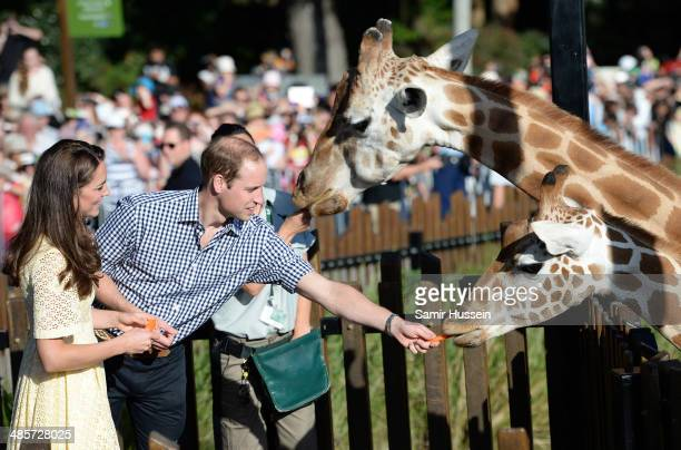 Prince William Duke of Cambridge and Catherine Duchess of Cambridge feed giraffes as they isit the Bilby Enclosure at Taronga Zoo on April 20 2014 in...
